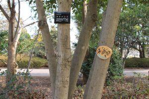 Tree_0709